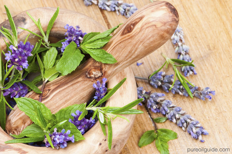 Majestic Pure Lavender Essential Oils Review