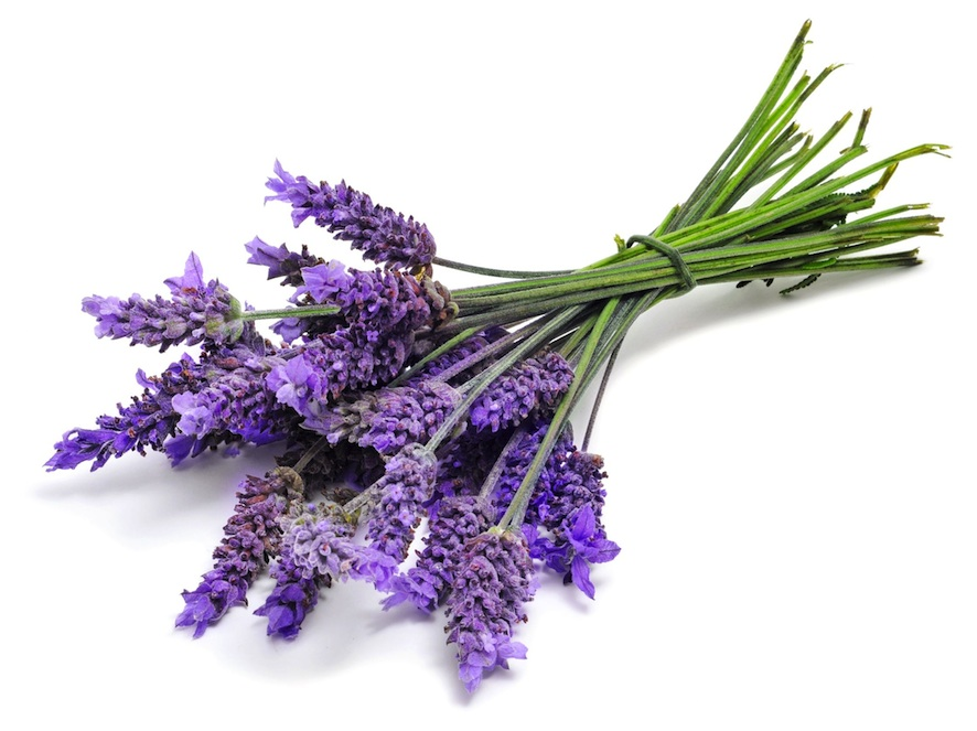 Lavender Oil is the Perfect Skin Care