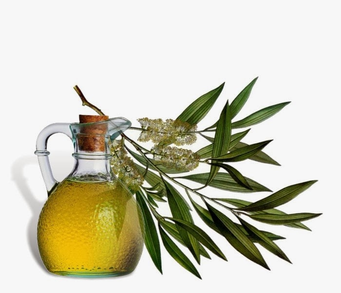 The Many Uses of Tea Tree Oil